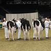 Royal16_Holstein_21M9A0097