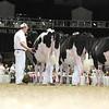 Royal16_Holstein_L32A3882
