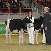 Royal16_Holstein_21M9A0274