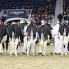Royal16_Holstein_L32A3915