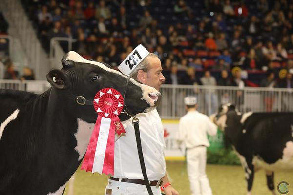 Royal16_Holstein_21M9A0170