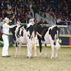 Royal16_Holstein_L32A4115