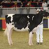 Royal16_Holstein_21M9A0326