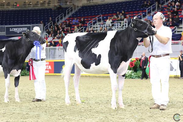 Royal16_Holstein_L32A3938