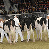 Royal16_Holstein_21M9A0157