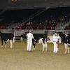 Royal16_Holstein_21M9A0043