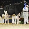 Royal16_Holstein_L32A4077