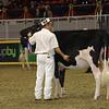 Royal16_Holstein_21M9A0046