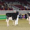 Royal16_Holstein_21M9A0216