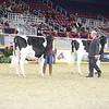 Royal16_Holstein_21M9A0197