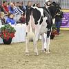 Royal16_Holstein_1M9A9929