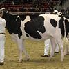 Royal16_Holstein_21M9A0111