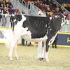 Royal16_Holstein_21M9A0202