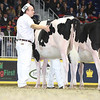 Royal16_Holstein_L32A4121