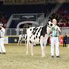 Royal16_Holstein_L32A3941