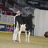 Royal16_Holstein_21M9A0208