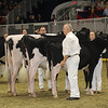 Royal16_Holstein_21M9A0230