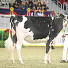 Royal16_Holstein_21M9A0188