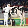 Royal16_Holstein_L32A4140