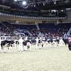 Royal16_Holstein_21M9A0262