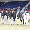 Royal16_Holstein_L32A3914