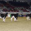 Royal16_Holstein_L32A4172