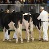 Royal16_Holstein_21M9A0224