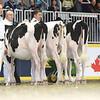 Royal16_Holstein_L32A4097