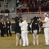 Royal16_Holstein_21M9A0272
