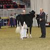 Royal16_Holstein_21M9A0346