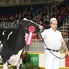 Royal16_Holstein_L32A4074