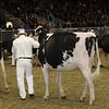 Royal16_Holstein_21M9A0022