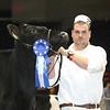 Royal16_Holstein_L32A4059