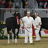 Royal16_Holstein_L32A4012
