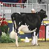 Royal16_Holstein_1M9A9950