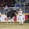 Royal16_Holstein_L32A4139