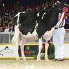 Royal16_Holstein_L32A4076