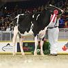 Royal16_Holstein_L32A4075