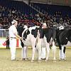 Royal16_Holstein_L32A3911