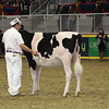 Royal16_Holstein_L32A4156