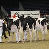 Royal16_Holstein_21M9A0102