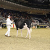 Royal16_Holstein_21M9A0083