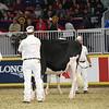 Royal16_Holstein_L32A4138