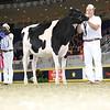 Royal16_Holstein_L32A3936
