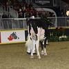 Royal16_Holstein_21M9A0060
