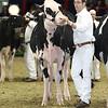 Royal16_Holstein_L32A4038
