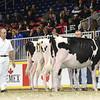 Royal16_Holstein_L32A4092
