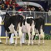 Royal16_Holstein_L32A4095