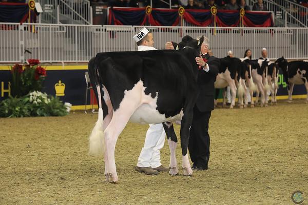 Royal16_Holstein_21M9A0339