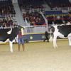 Royal16_Holstein_21M9A0219